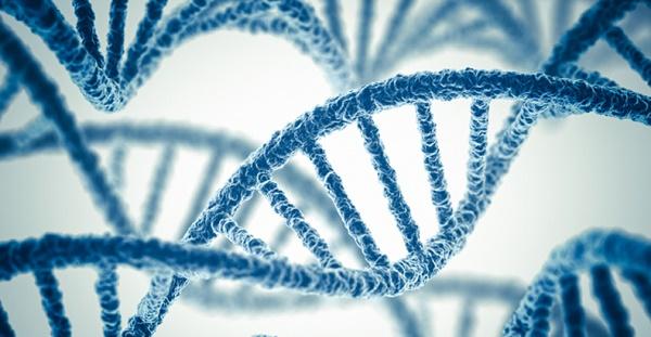 genetique-adn